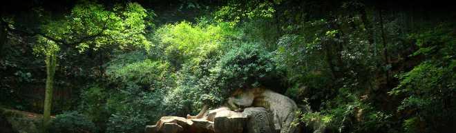 trees-rocks-50Q